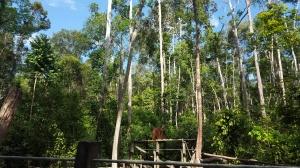 hutan dan langit biru di Pondok Tangguy