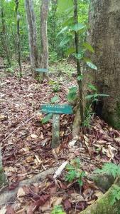 area tanaman obat di hutan Pesalat