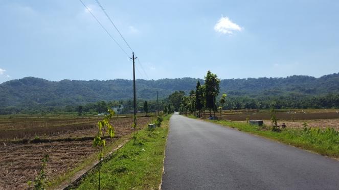 jalanan mulus, langit biru, sawah di kanan kiri jadi hiburan menuju Kopi Menoreh
